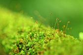 Moss 关门 — 图库照片