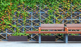 Bench in front of green hedge — Stock Photo