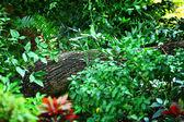Tropical Rainforest — Stock Photo