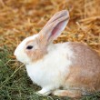 Stock Photo: Rabbit on grass