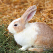 Rabbit on grass - Lizenzfreies Foto