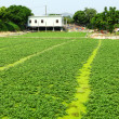 Gren field - Photo