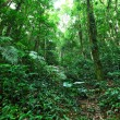 Rainforest — Stock Photo #18751389
