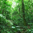 Rainforest — Stock Photo #18751401