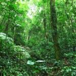 Rainforest — Stock Photo #18751401