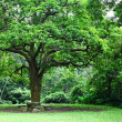 Stock Photo: Big tree