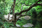 Forest with water and tree — Stock Photo