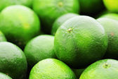 Lime citrus fruit — Stock Photo