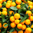 Chinese kumquat for chinese new year — Stock Photo