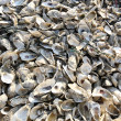 Stock Photo: Oyster shell