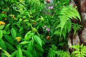 Rośliny lasu — Zdjęcie stockowe