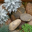 Plant on rock stone — Stock Photo