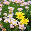 Flower field — Stock Photo #22820128