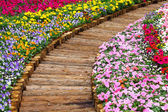 Wooden path in flower bed — Stock Photo