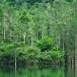 Forest with lake — Stock Photo