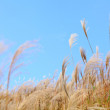 Grass in autumn — Stock Photo