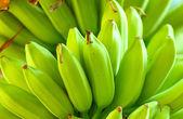 Green banana tree — Stock Photo