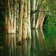 Tree on water - Stock Photo