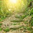 Path way in forest  — Stock Photo