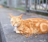 Street cat — Zdjęcie stockowe