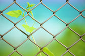Chain link fence with fresh plant — Stockfoto