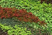 Grön växt på vägg — Stockfoto