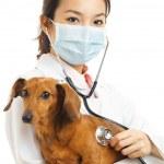 Asian veterinarian with dachshund dog — Stock Photo