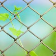 Chain link fence with fresh plant — Stock Photo