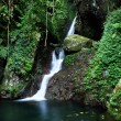 Jungle with waterfall — Stock Photo