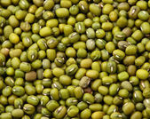 Mung bean close up — Stock Photo