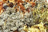 Chinese kruiden thee ingrediënten — Stockfoto