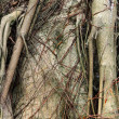 Stock Photo: Tree root