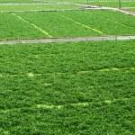 Field — Stock Photo #27534549