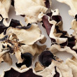 Stock Photo: Black fungus