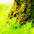green moss — Stock Photo