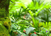 Forest plant — Stock Photo