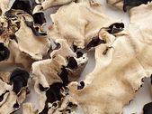 Dried black fungus — Stock Photo