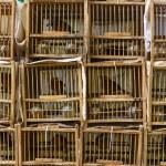 Bird Market in Hong Kong — Stock Photo