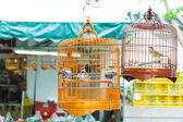 Birdcage on bird park in Hong Kong — Stock Photo
