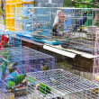 Bird for sell in bird park — Stock Photo