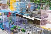 Bird for sell in bird park — Stock Photo