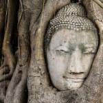 Buddha head in a tree trunk, Wat Mahathat — Stock Photo