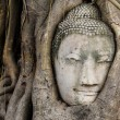 Stock Photo: Buddhhead in tree trunk, Wat Mahathat