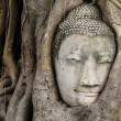 Buddhhead in tree trunk, Wat Mahathat — Stock Photo #29640599