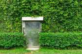 Green ivy leaves wall with metal door — Stock Photo