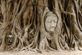 Old tree with buddha head in Ayutthaya — Stock Photo