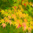 Autumn maple tree — Stock Photo #30041825