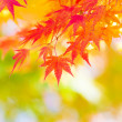 Maple tree in autumn — Stock Photo #30041901