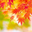 Maple tree — Stock Photo #30045863