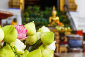 Lotus bud in thailand temple — Stock Photo